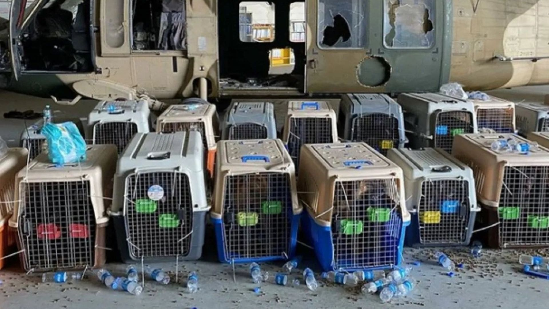At the last minute, dogs and cats were denied their flight to freedom. WITH YOUR CONTINUED HELP we will continue to do EVERYTHING IN OUR POWER to SAVE THEM! 3