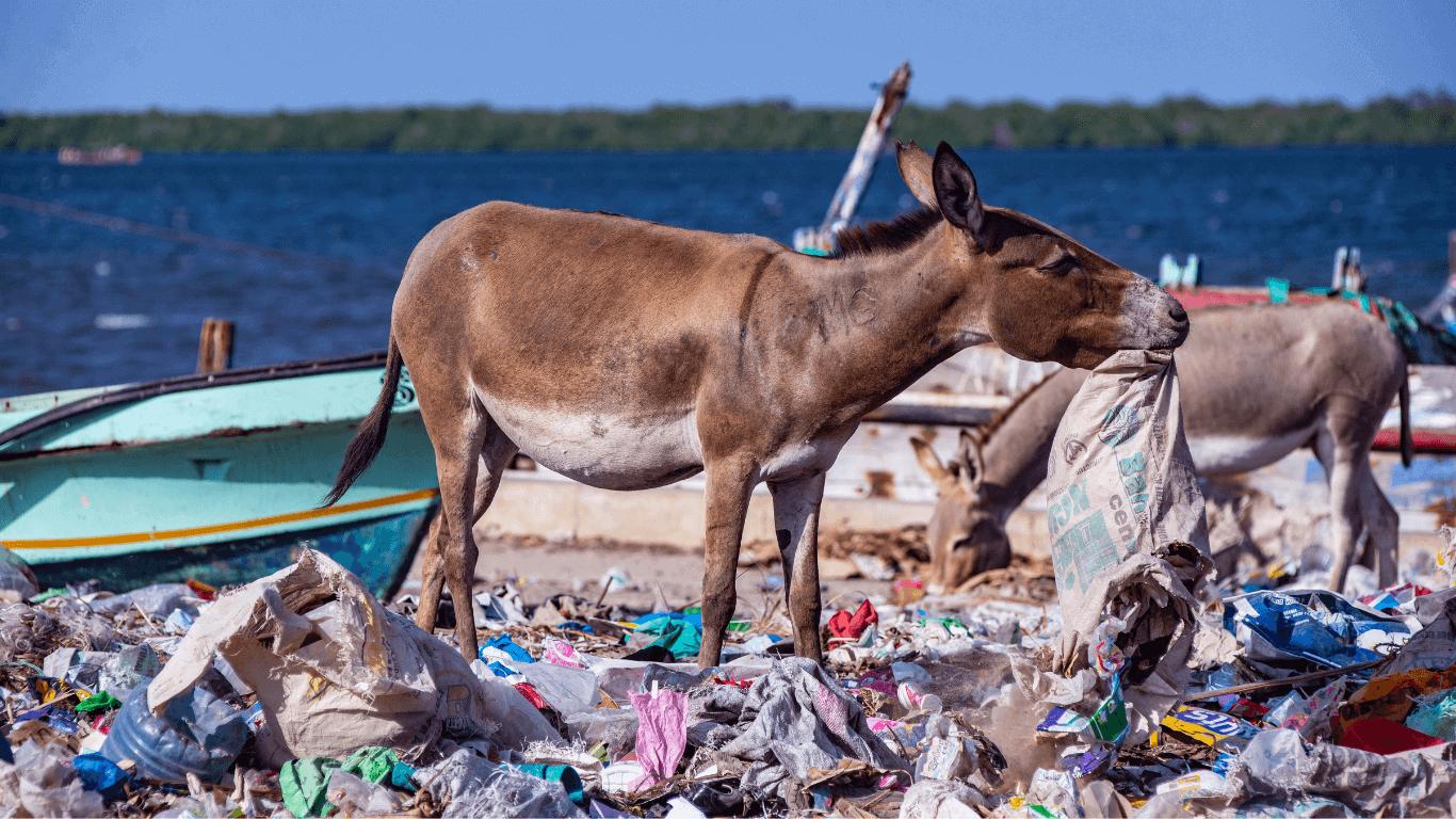 please help the kenya donkeys