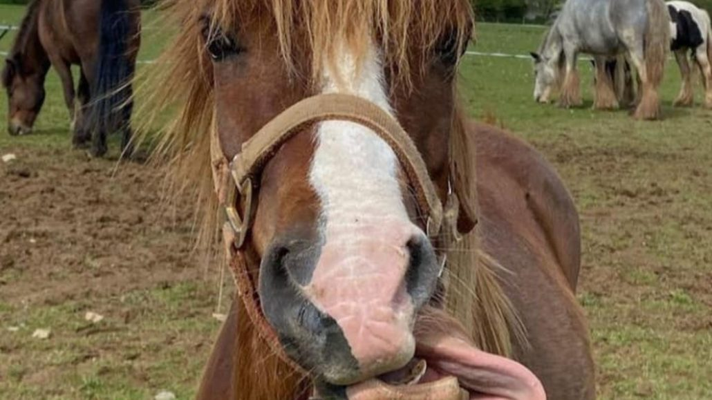 More Good News From Rescued Ponies!