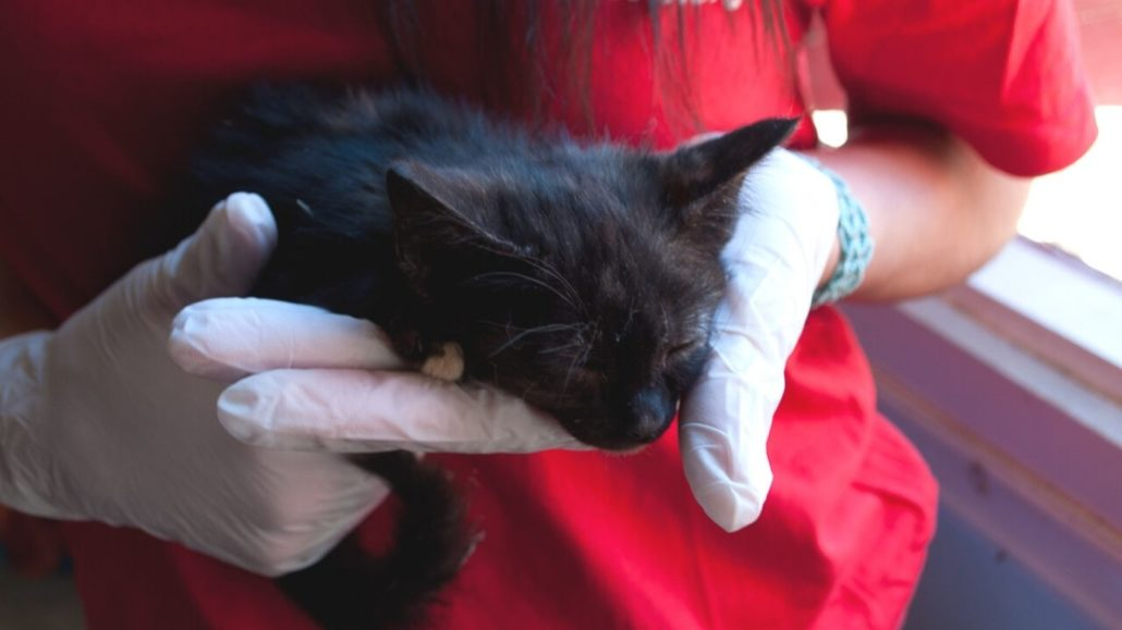 How We Are Helping An Entire Population Of Street Cats On The Greek Island Of Ithaca