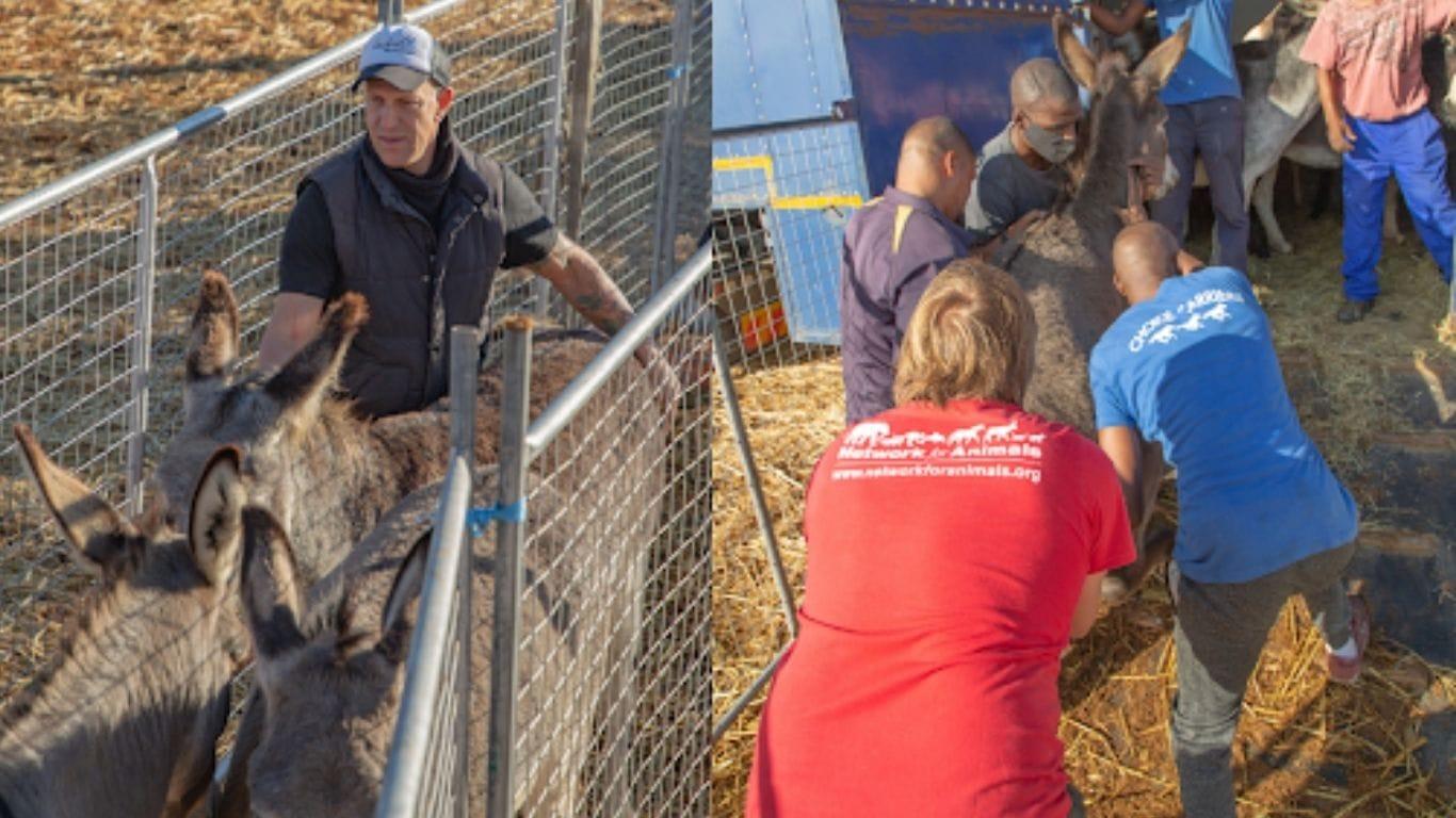 Donkeys Destined For Cruel Chinese Donkey Skin Trade Saved! 3
