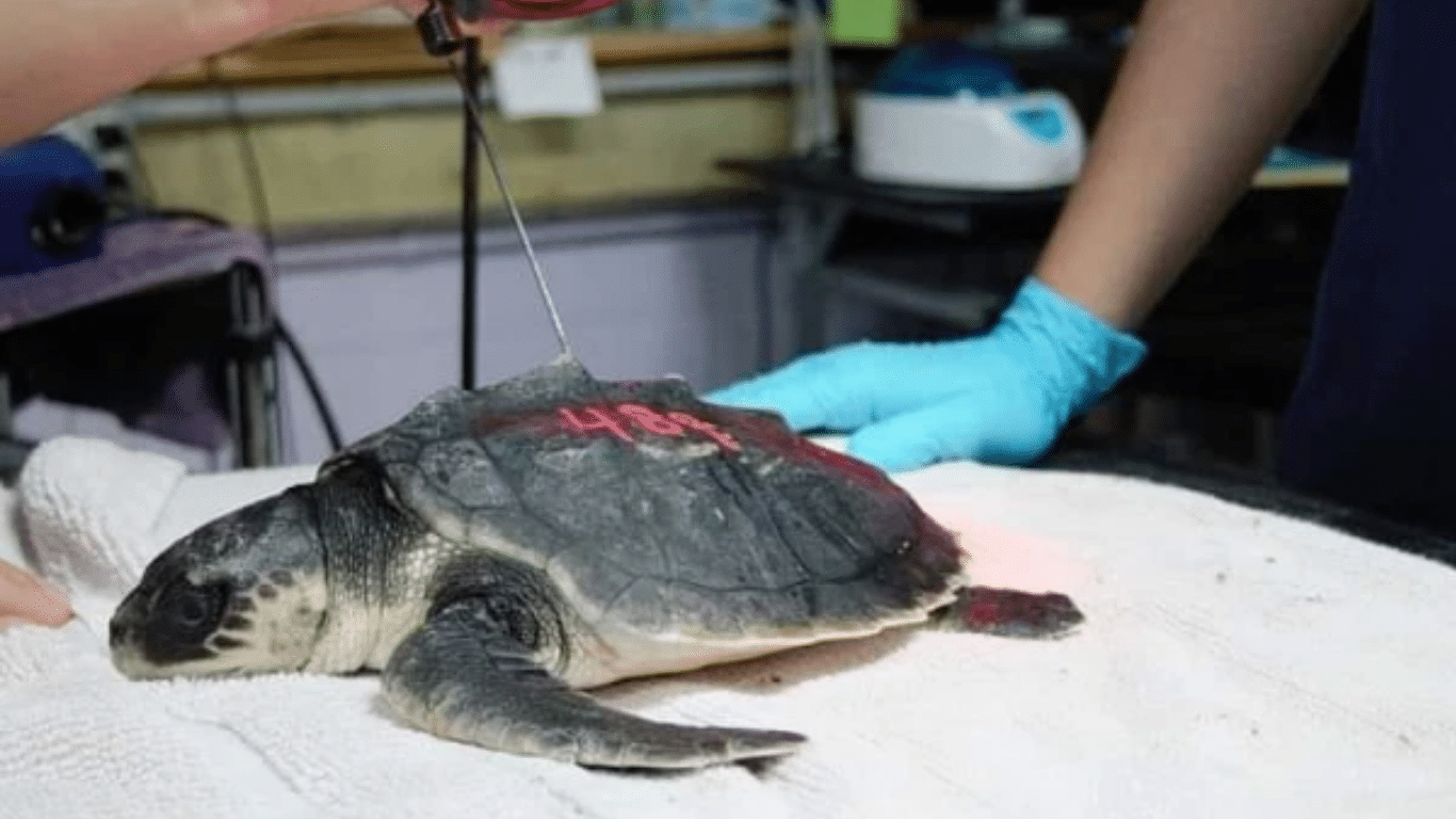Deep South DEEP FREEZE! Texas sea turtles being FROZEN to DEATH! 3