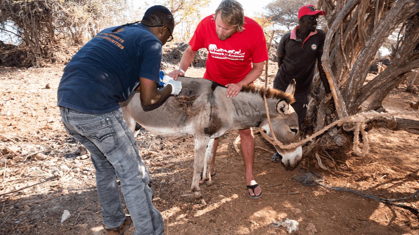 starving kenya donkeys