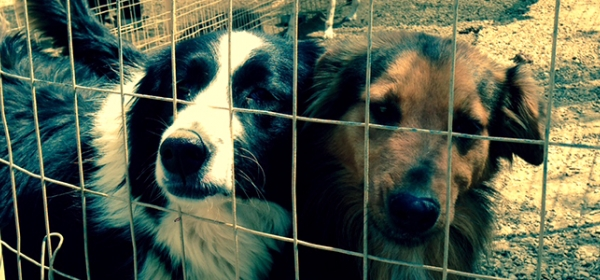 Emergency Grant Given To Animal Rescue Kefalonia 10