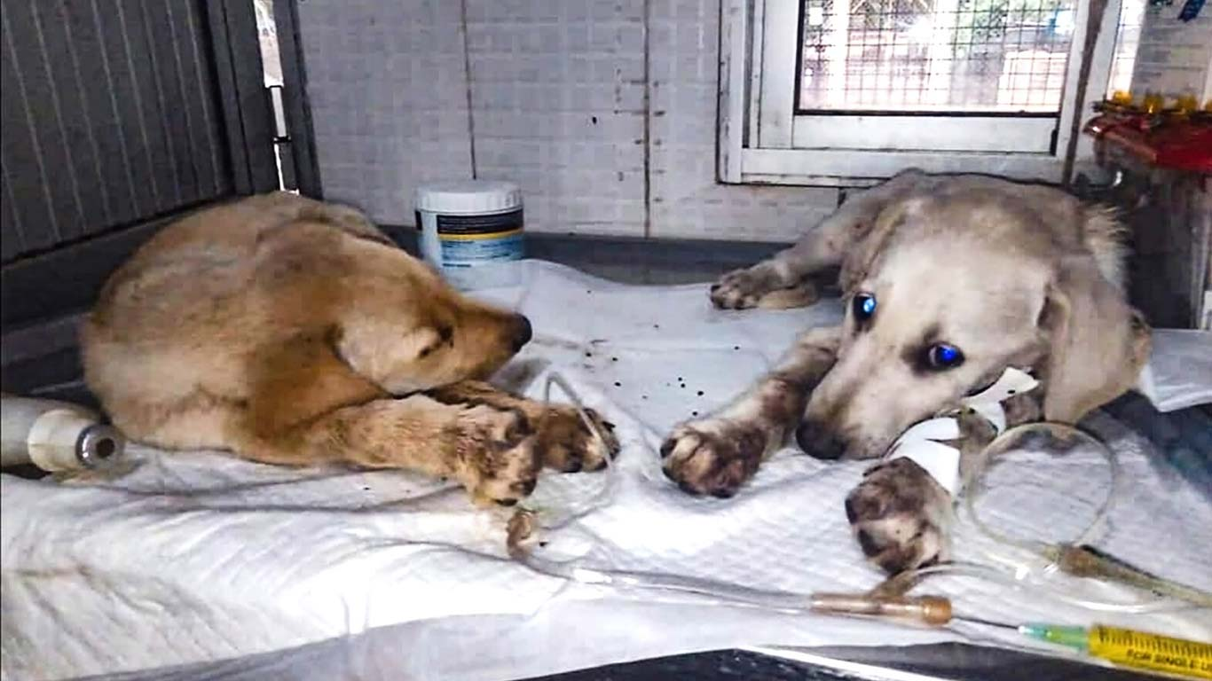 UNACCEPTABLE! Four puppies tossed like TRASH from the back of a moving truck! 3
