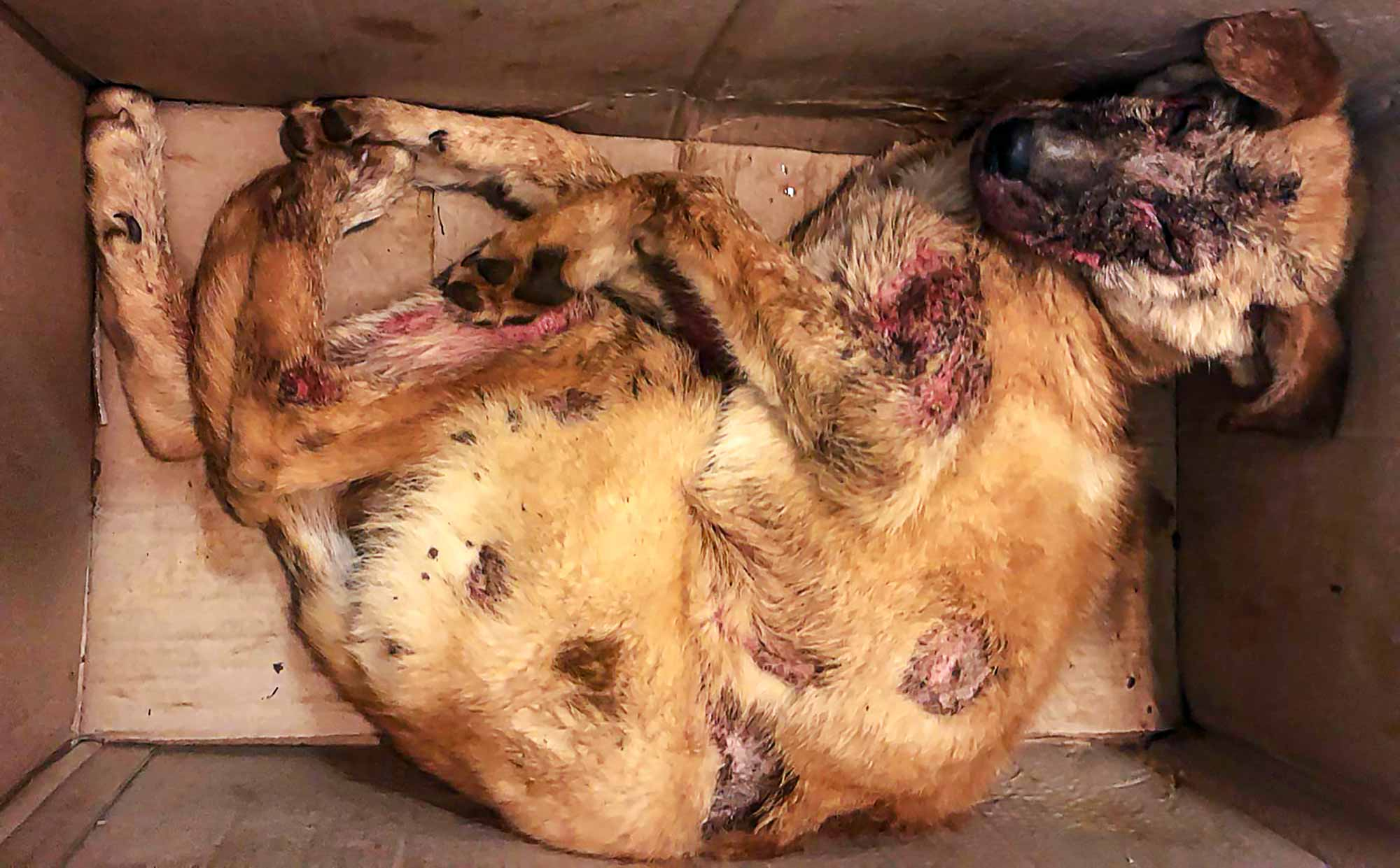 Bethlehem's street dogs are being shot, poisoned and burned with acid! 3