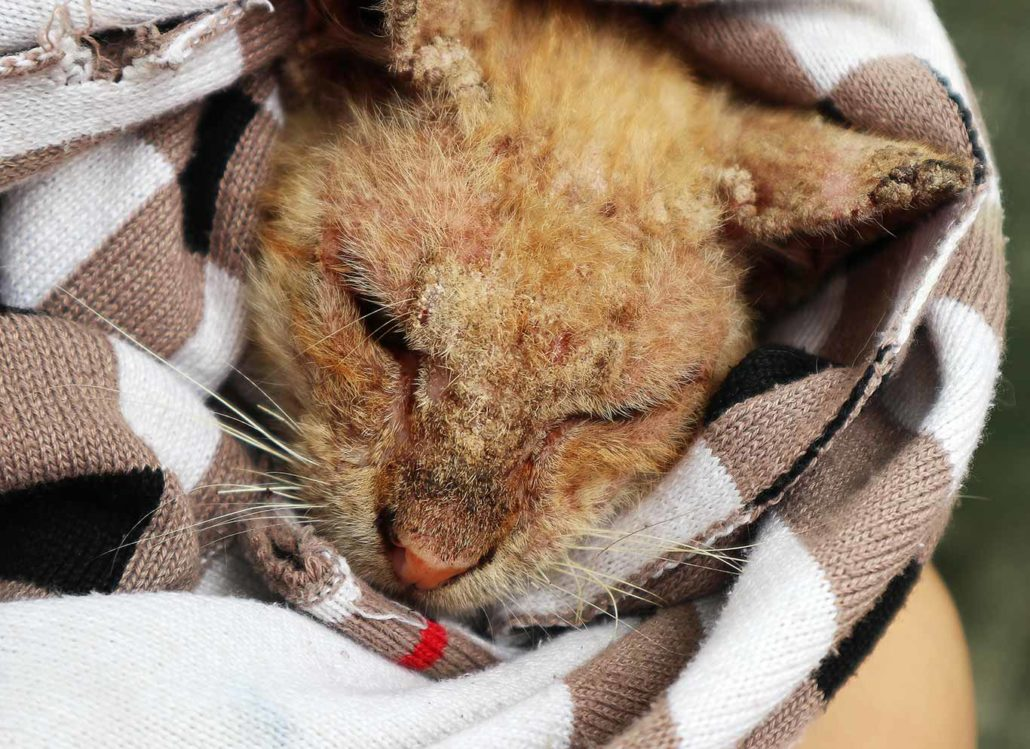 A small victory for NFA but it means the WHOLE WORLD to one poor kitty!