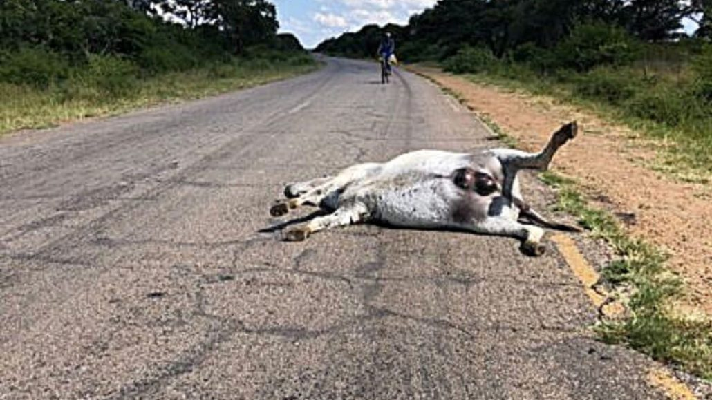 For just a dollar a donkey we have a plan to SAVE THOUSANDS from being killed by motorists! 1