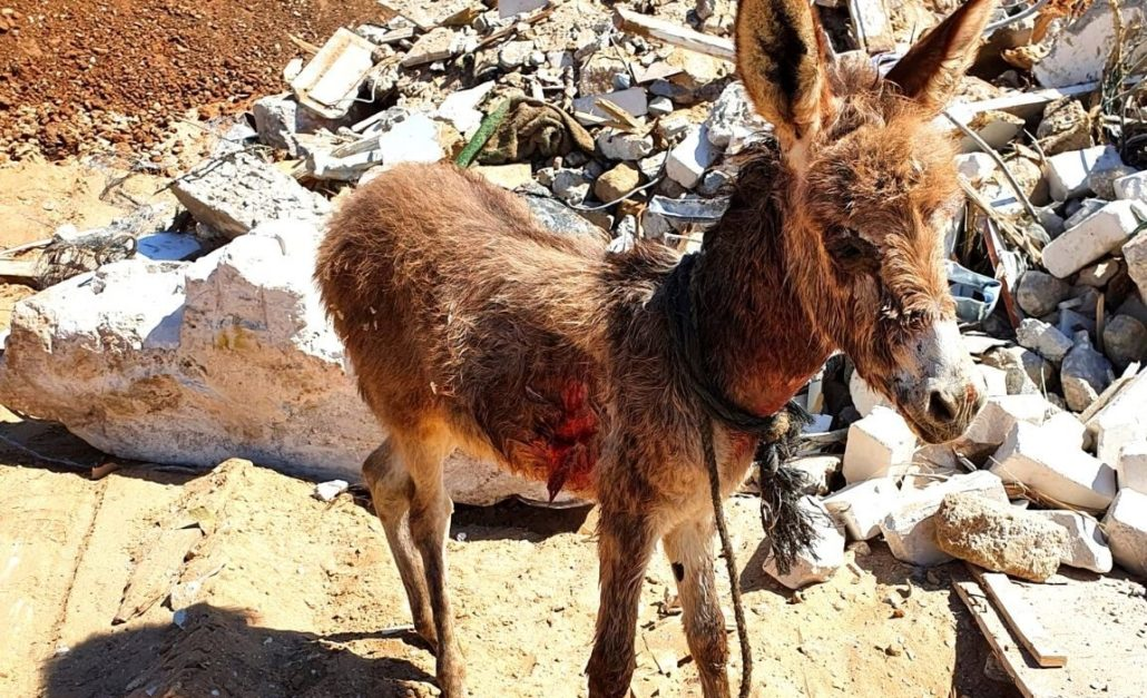 EMERGENCY! Children ripped Dash the baby donkey from his mother's side and BRUTALIZED him. BUT THERE IS HOPE! 1