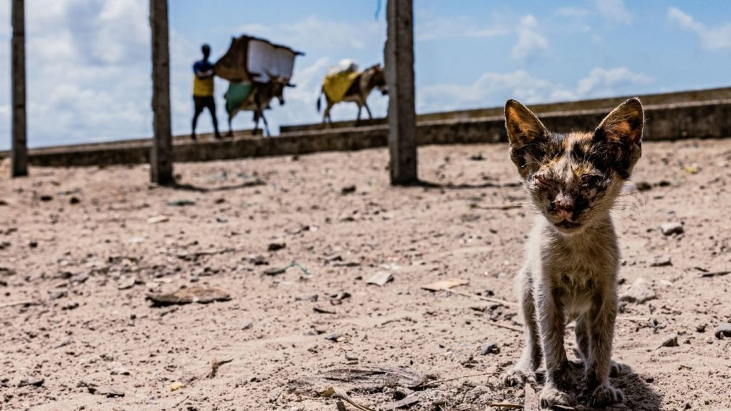 There are absolutely no veterinary facilities to help suffering dogs, cats and donkeys in this small town! 1