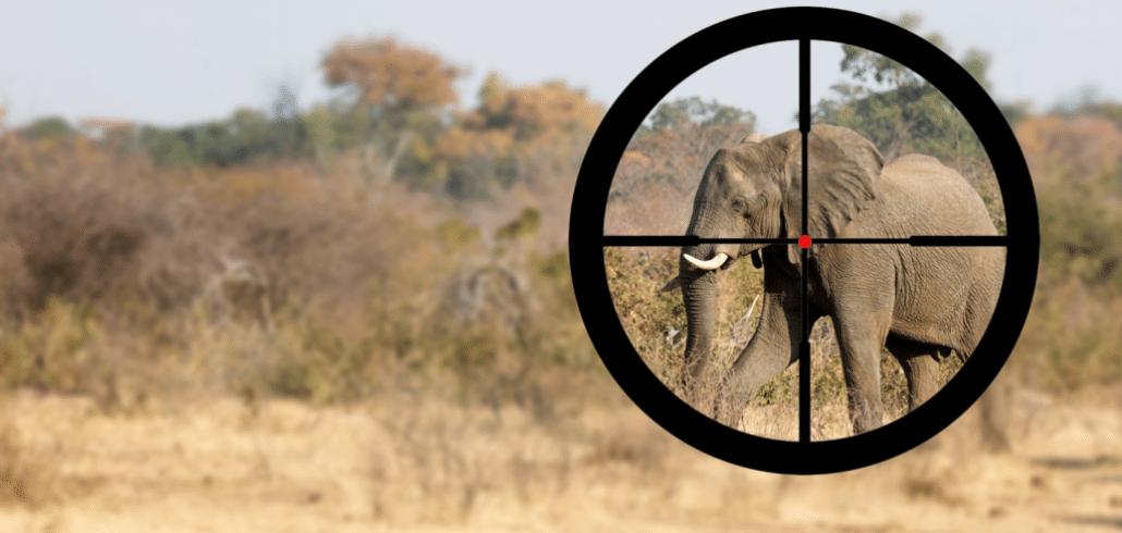 Botswana gives hunters the green light to kill elephants 7