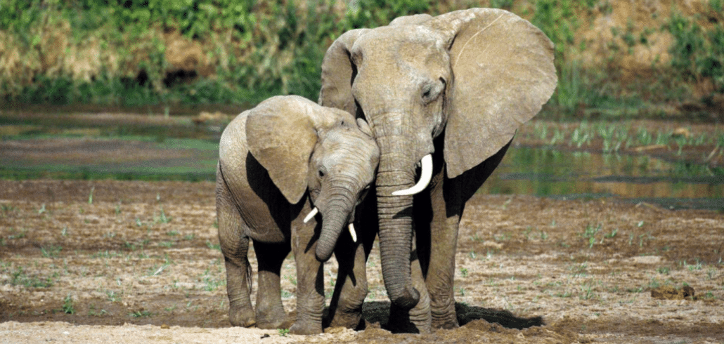 The impact of Botswana's hunting decision will be felt across Africa 1