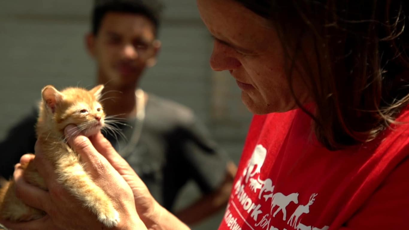 In this tragic year of COVID, you can STILL help animals! Only 7 days remain! 6