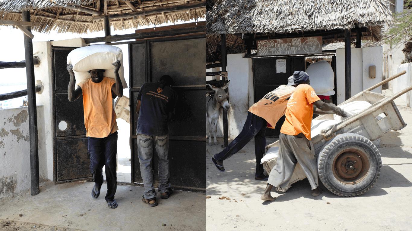 starving donkeys in lamu kenya