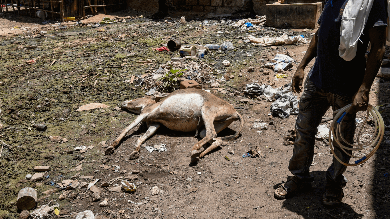 Rampant abuse to donkeys - beatings and whippings! DEATH FROM STARVATION! 1