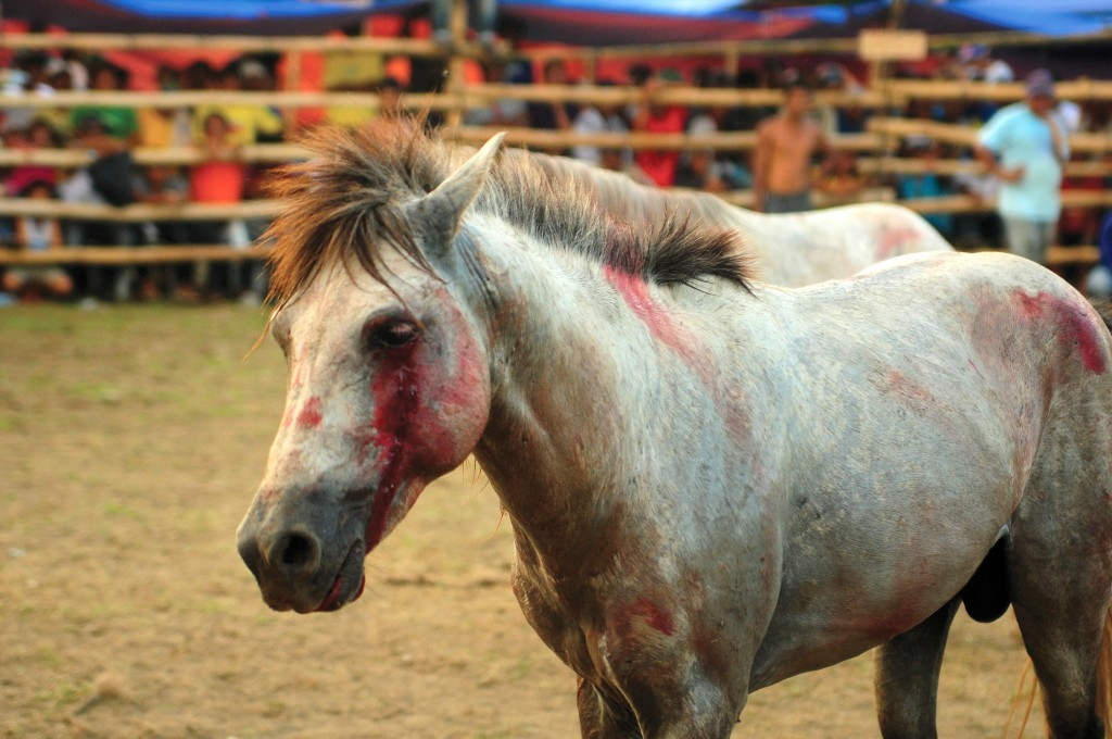 Organized Horse Fighting vs Hearts, Minds & Activism 9