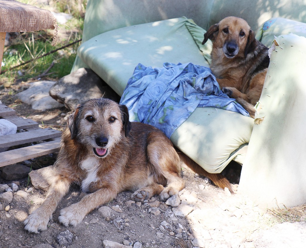 Winter Is Coming, Dubrovnik's Street Dogs Face Another Harsh Winter 5