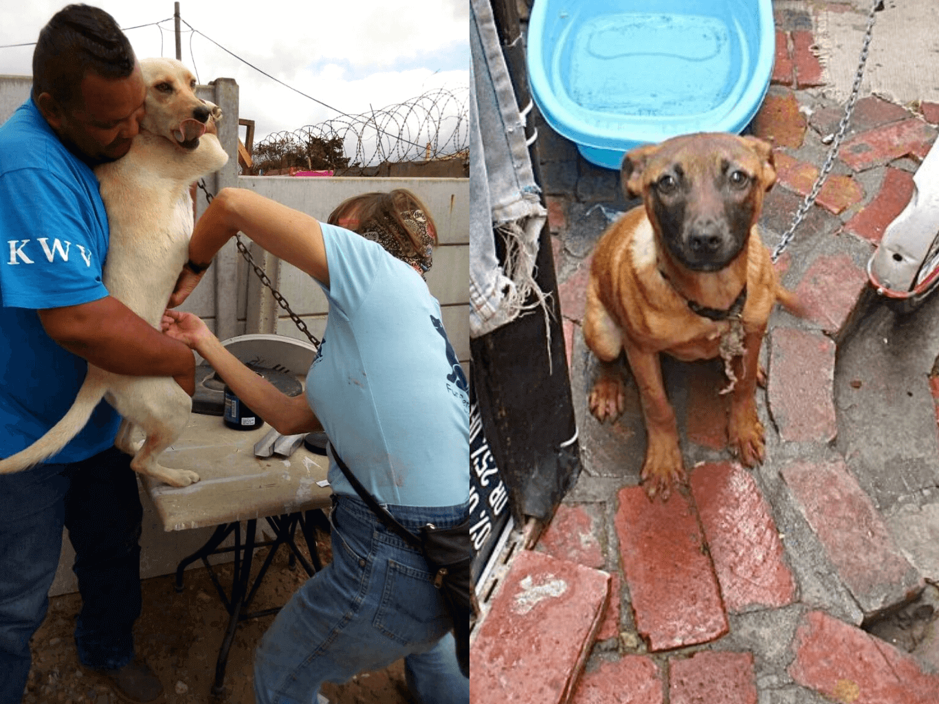 dog CHAINED without food or water