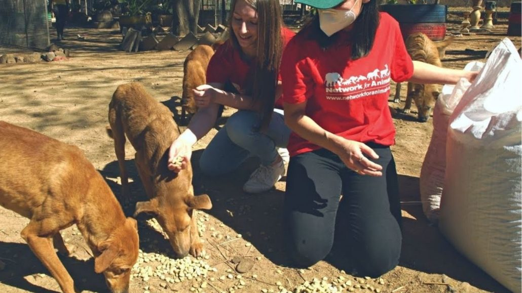 Thanks To Your Donations, We Delivered Nearly TWO TONS Of Food To Dogs In Zimbabwe!
