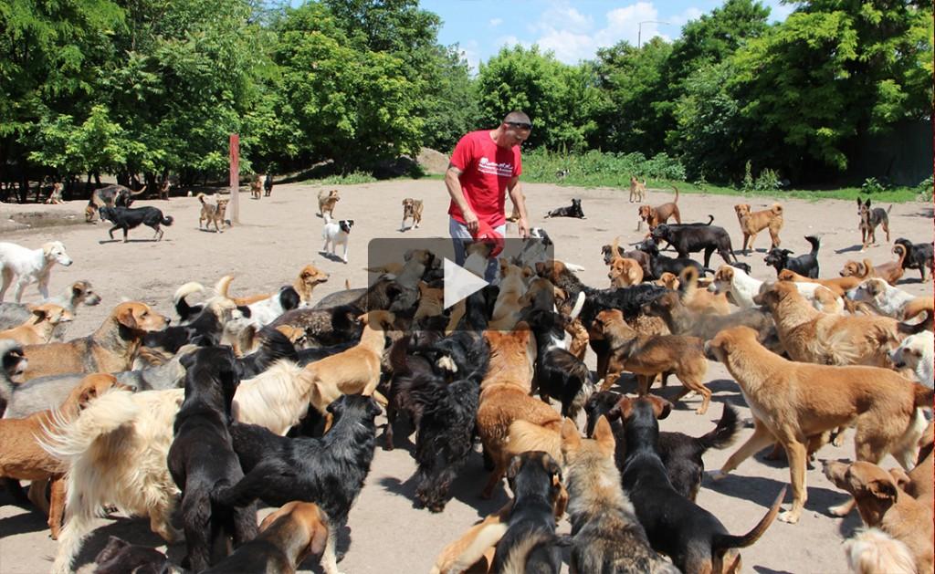 Help save 640 Serbian dogs 3