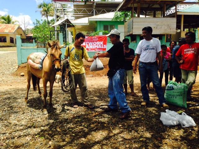 Horse Clinics Against Horse Fighting in Don Carlos 9