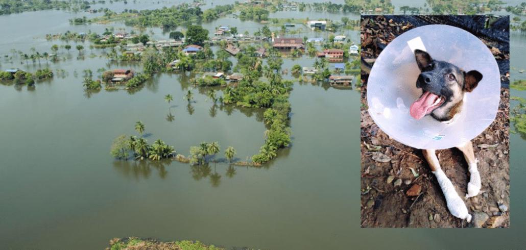 Heavy rains wreak havoc at Thai Animal Sanctuary 1