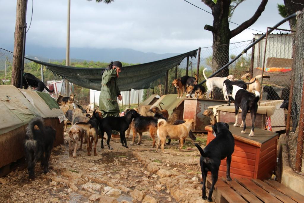 NEWSFLASH: Dogs in distress in Croatia 8