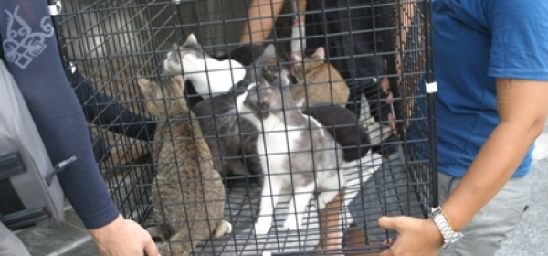 Thai Floods Put Animals At Risk 13