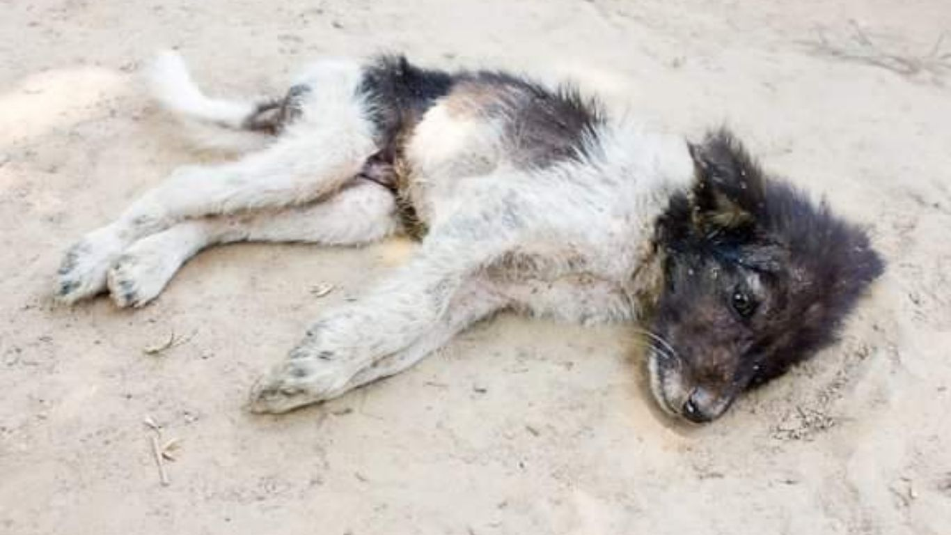 Will YOU be part of one of the largest-ever projects to save stray dogs? 1