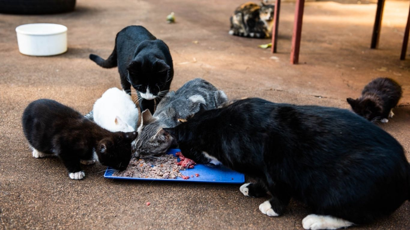 Help save 80 cats and kittens! Hotel manager vowed to KILL THEM AS FAST AS HE COULD! 1