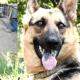 Armed Thugs Attacked Montevideo Dog Shelter; Vet Injured