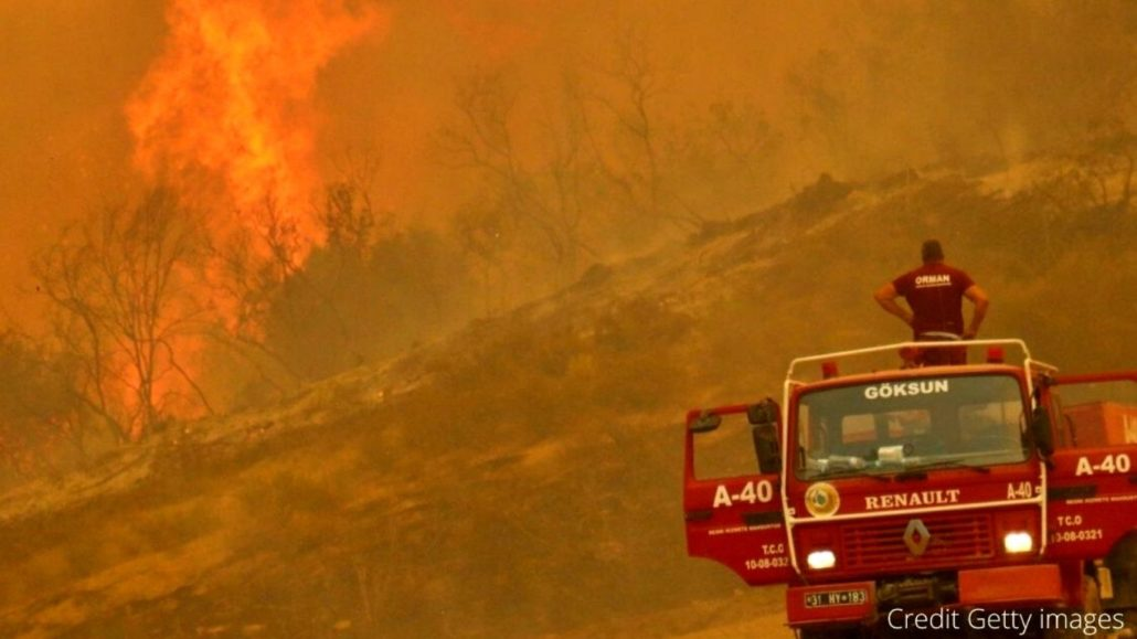 Wildfire (and wildlife) DISASTER! Countless animals in the flaming crosshairs! 1