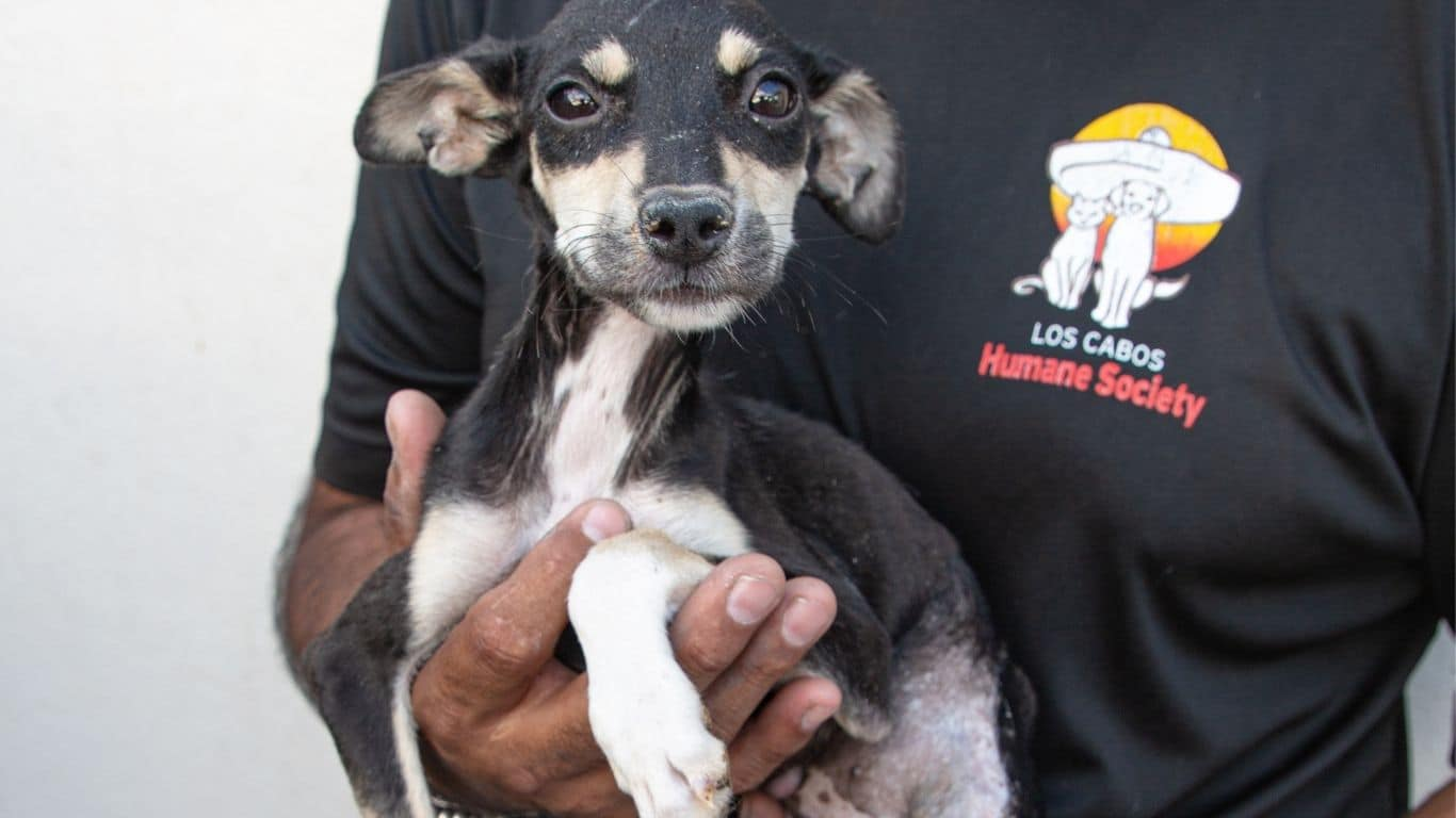 COVID threatening COLLAPSE of vital spay and neuter program needed to CHANGE THE LIVES of street animals in Mexico! 2