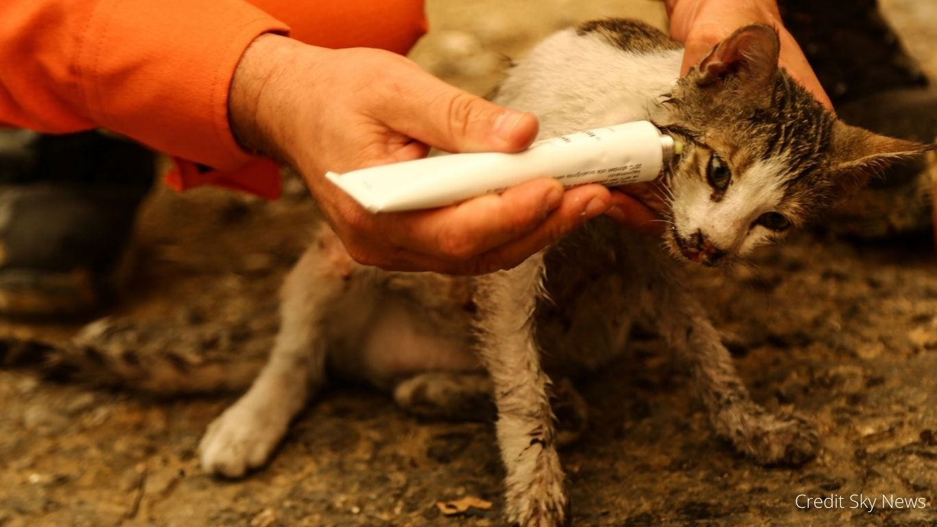 WILDFIRE CATASTROPHE! Animals TRAPPED, TERRIFIED - in IMMINENT DANGER! 2