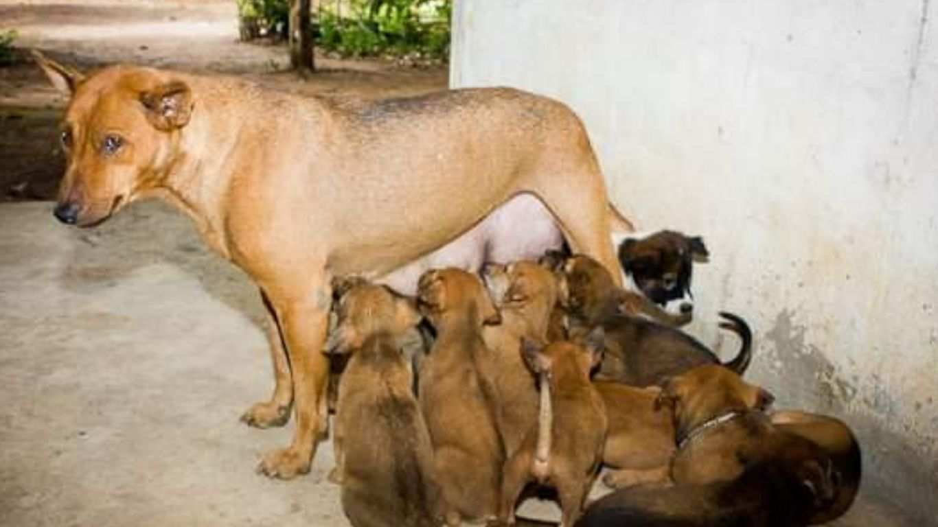 Will YOU be part of one of the largest-ever projects to save stray dogs? 2