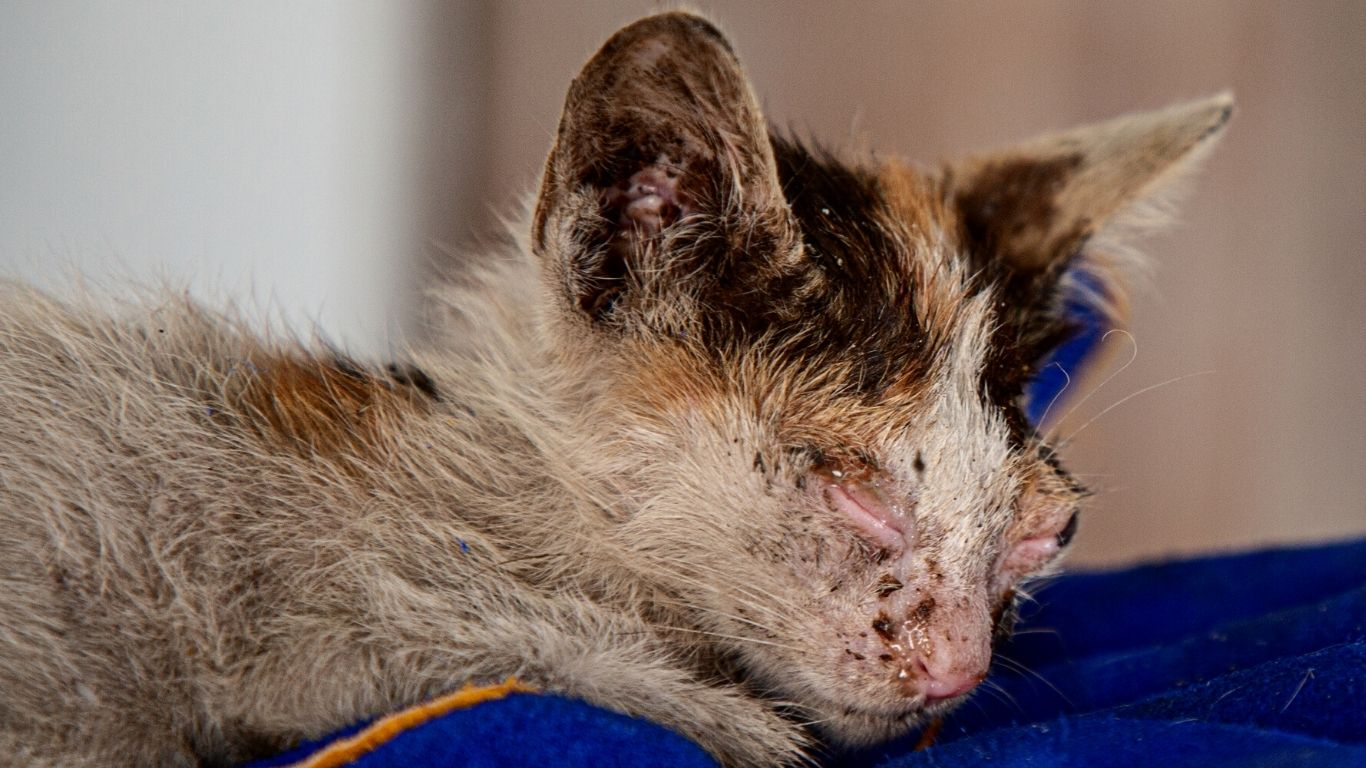 There are absolutely no veterinary facilities to help suffering dogs, cats and donkeys in this small town! 2