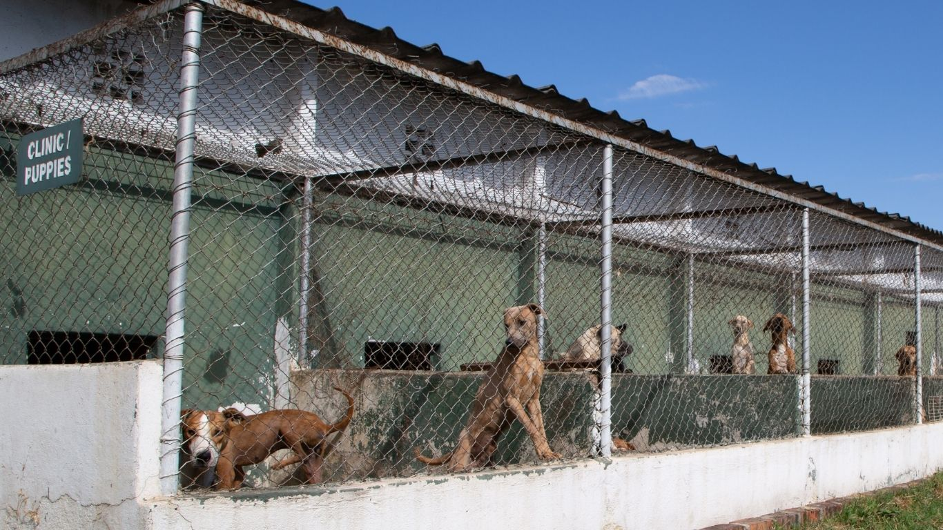 COVID is the culprit! Shelter under imminent threat of being shut down! Hundreds of animals face DEATH! 2