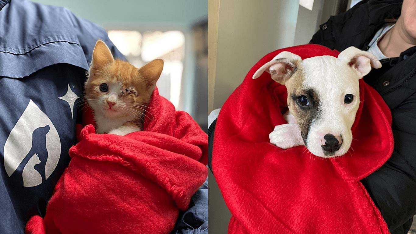 Little Acts Of Kindness: Vulnerable Dogs And Cats From Cape Town's Slums Get 185 Blankets! 2