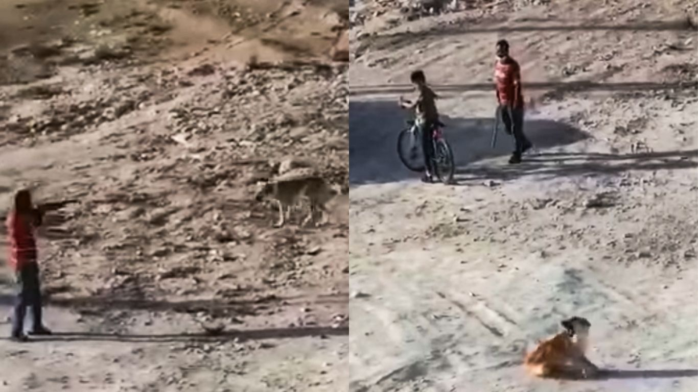 Street dogs being purposely hit by cars, shot and poisoned 2