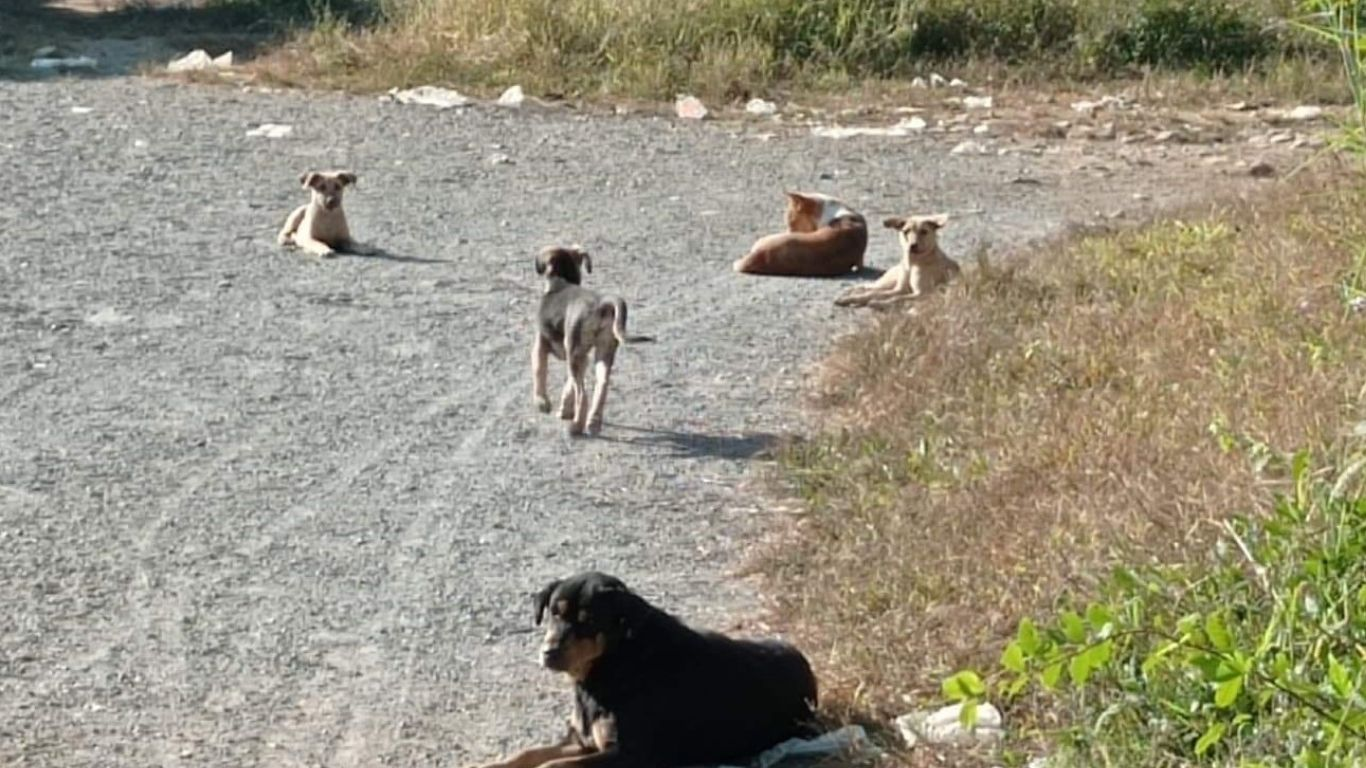 Will YOU be part of one of the largest-ever projects to save stray dogs? 3