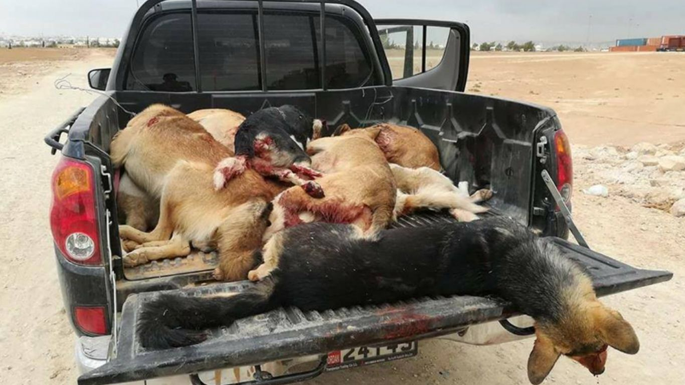 Street dogs being purposely hit by cars, shot and poisoned 3