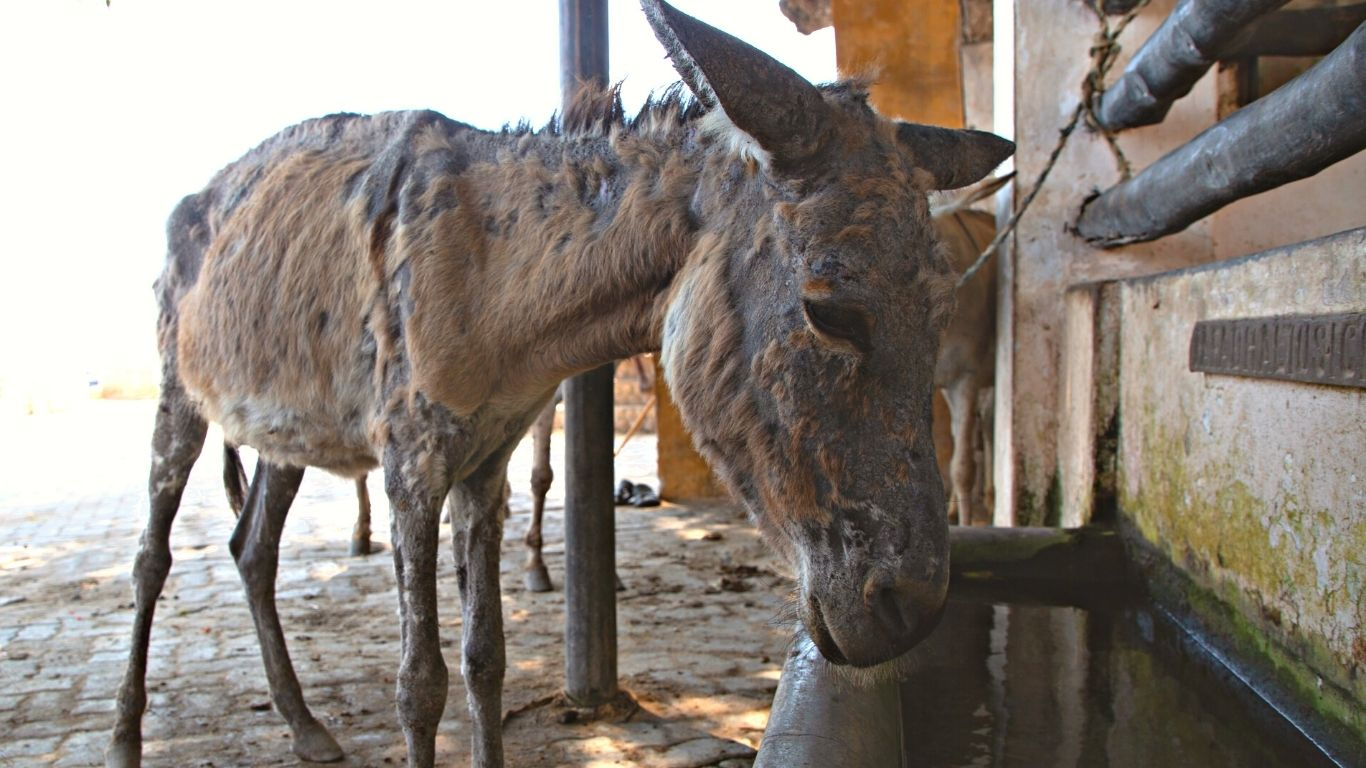 There are absolutely no veterinary facilities to help suffering dogs, cats and donkeys in this small town! 3