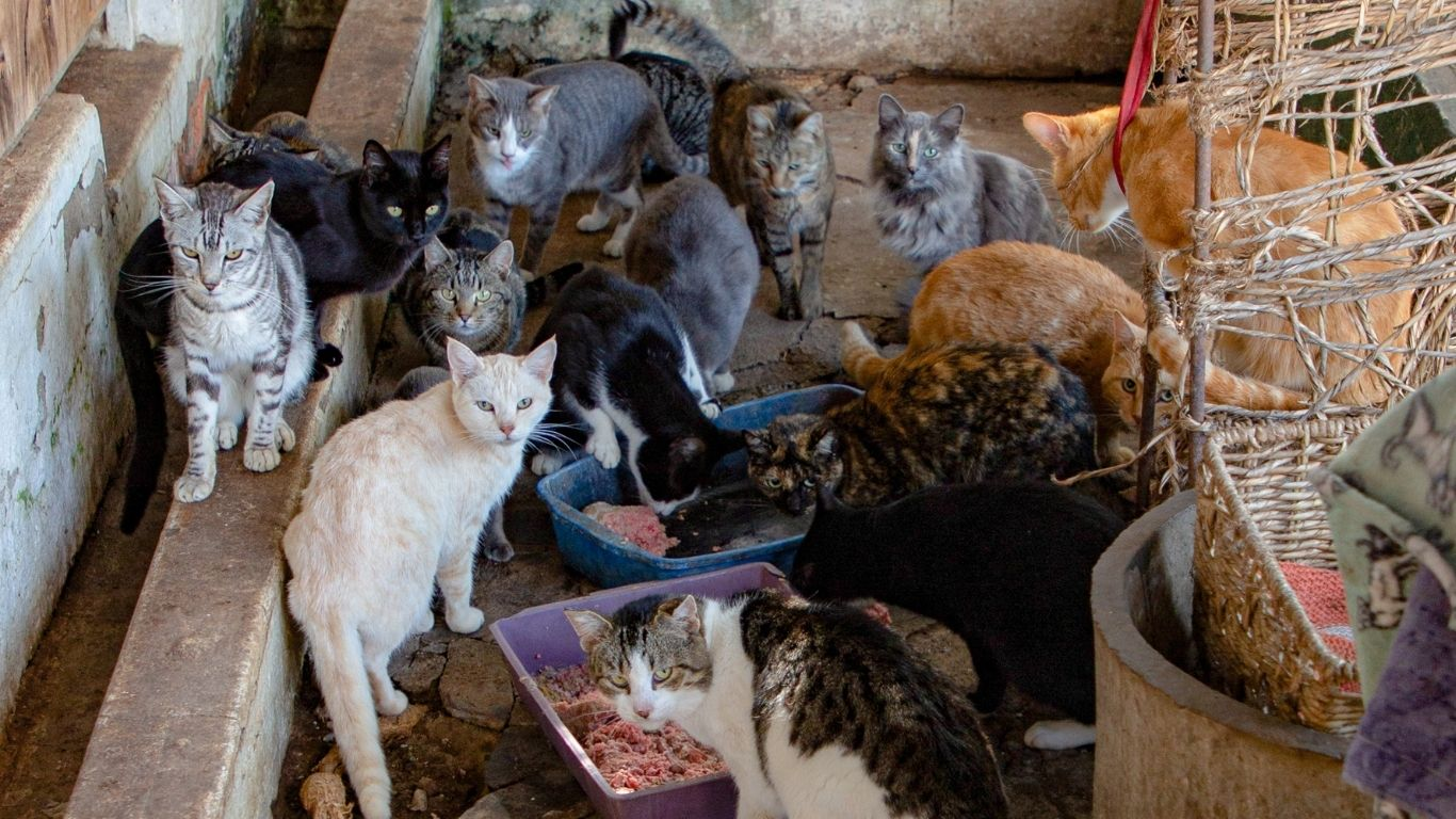 COVID is the culprit! Shelter under imminent threat of being shut down! Hundreds of animals face DEATH! 3