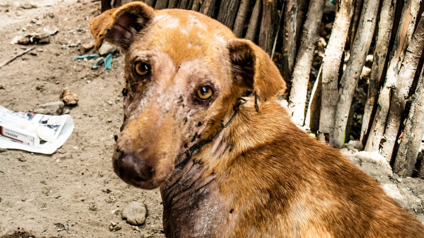 There are absolutely no veterinary facilities to help suffering dogs, cats and donkeys in this small town! 4