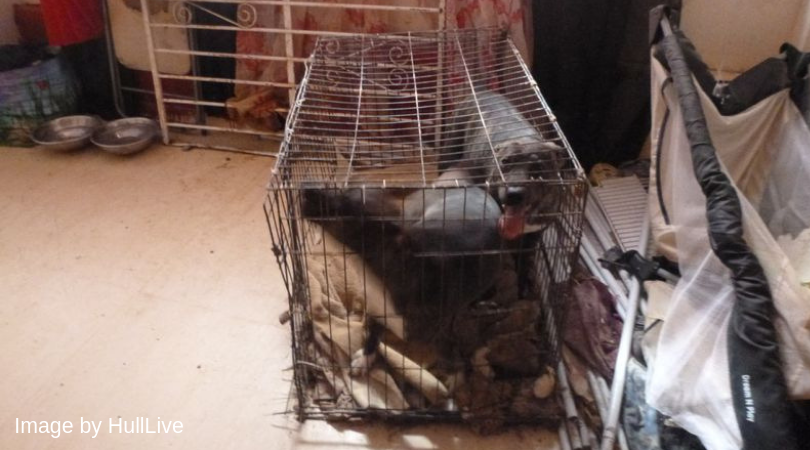 English woman who made caged dogs rip each other to pieces escapes jail 4