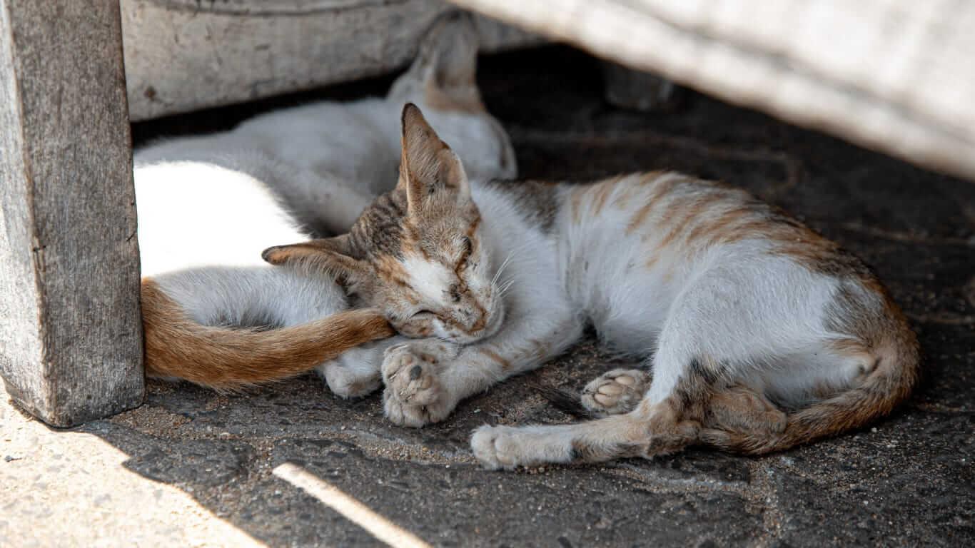 Kenya Lamu Cats being born into misery