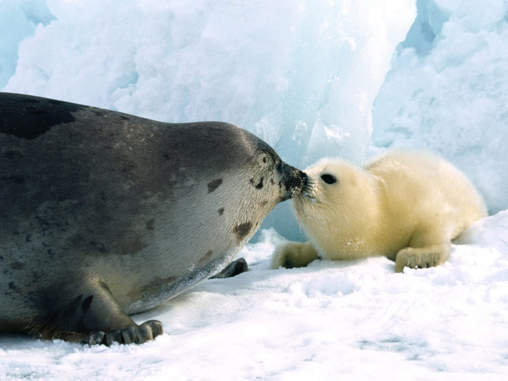 Seal Hunt Update 5