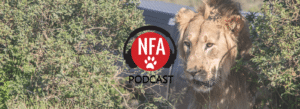 Lion Relocation