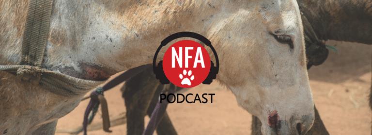 Bela Bela Podcast