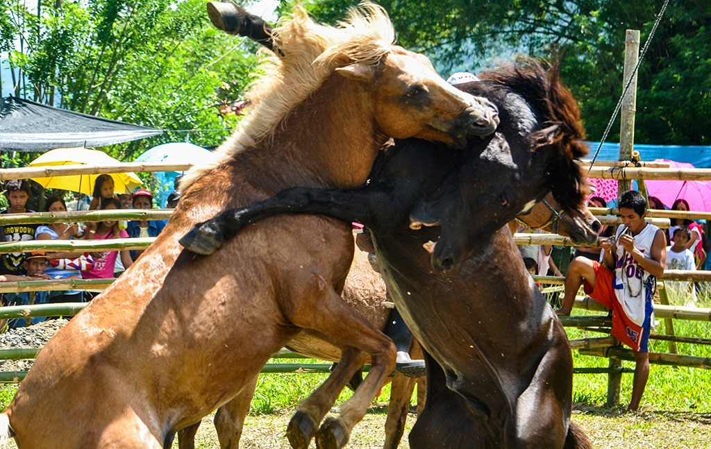This horse fighting raid came to a totally unexpected conclusion! 1